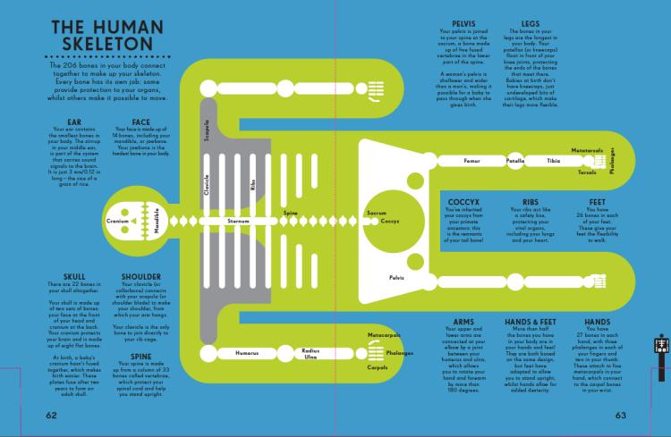 Human skeleton by Peter Grundy